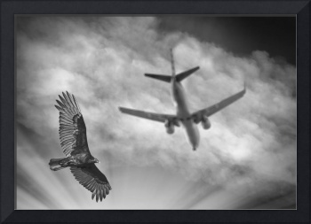 large bird flying with plane 0642