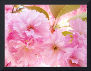 TREE BLOSSOMS Art Cards Pink Blossoms Spring (13)