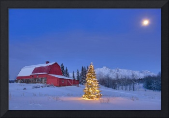Lit christmas tree in a snow covered field standin