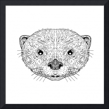 Asian Small-Clawed Otter Head Drawing