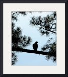 Hawk Silhouette 3515 by Jacque Alameddine