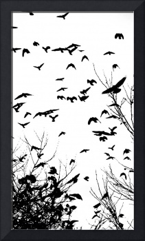 Murder of Crows 1