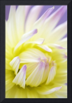 Dreamy Dahlia Flower Wall Art
