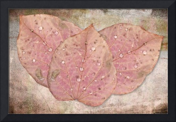 Water-Drops on Autumn Leaves
