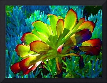 Succulent Backlit on Blue 1