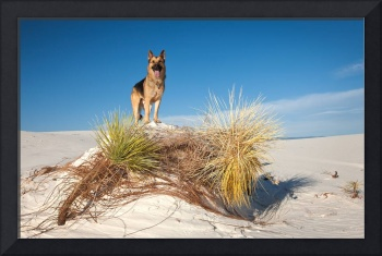 Cody At White Sands, NM