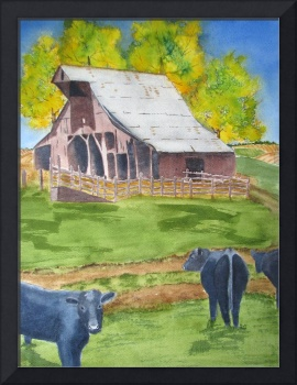 Rural America Old Missouri Barn and black angus co