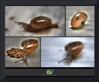 Curious Little Snail...!!!
