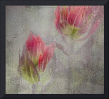 Indian Paintbrush with Painterly Effects