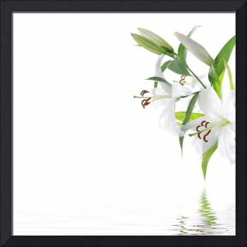 White lilia flower - SPA design background.