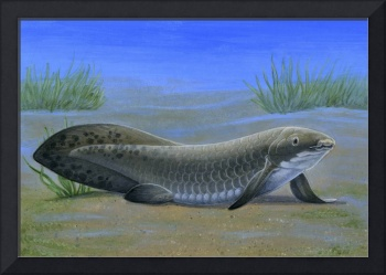 Ceratodus, an ancient lungfish that lived during t