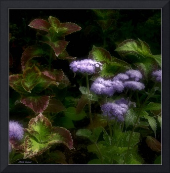 Purple and green plant
