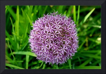 Flower ball thing