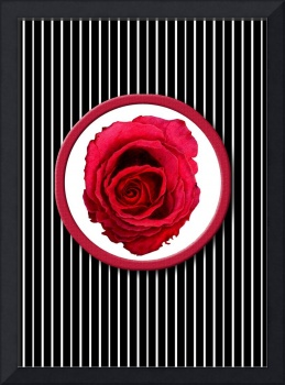 Red Rose Stripes