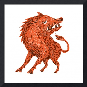 Angry Razorback Ready To Attack Drawing