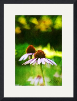 Cone Flowers & Hearts by D. Brent Walton