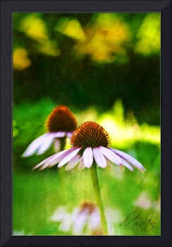 Cone Flowers & Hearts
