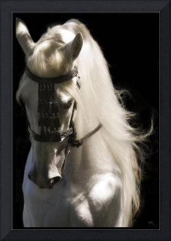 Andalusian Amante