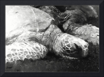 Sea Turtles #1