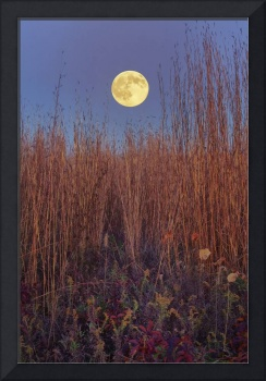 Hunters Moon 1 by Jim Crotty