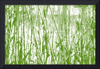 Reeds along water's edge