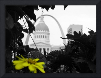 St. Louis in Yellow