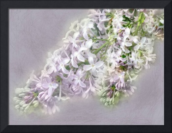 Lilac Song