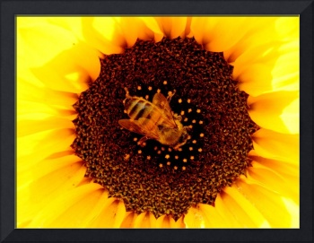 Bee In A Sunflower