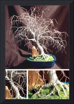 HICKORY in BLUE BASE - Wire Tree Sculpture