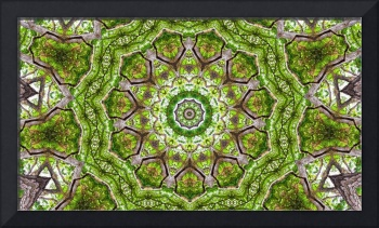 Tree Kaleidoscope #3
