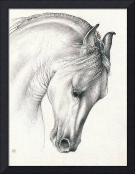 Classic Andalusian Horse