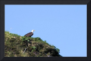 Eagle on the cliff