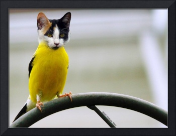cat bird (Photoshop Play)