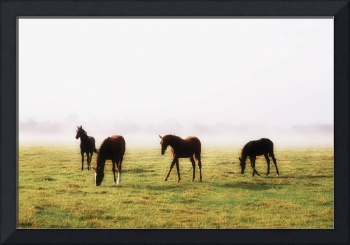 Thoroughbred Foals With A Mist Behind Them