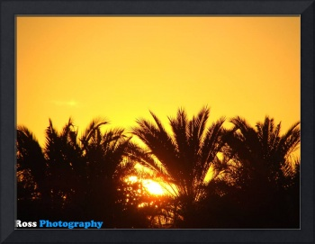 Sunset_behind trees_2