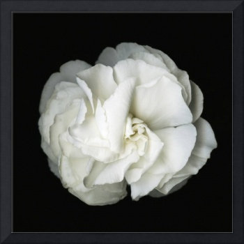 White Flower Blossom- Original Black and white Pho