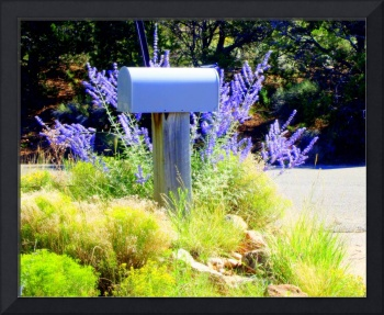 Rural Southwestern Mailbox with Lavendar
