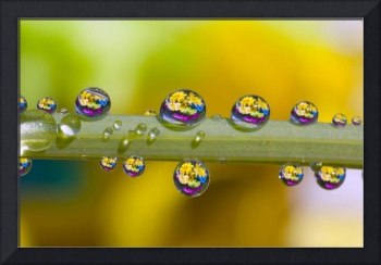 Water Drops On A Flower Stem