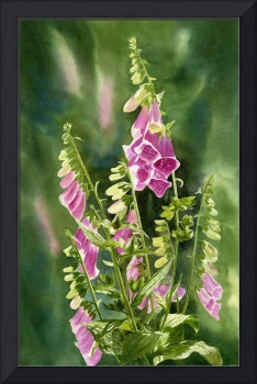 Foxgloves with Background