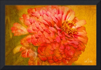 Zinnia Flower Picture