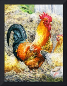 Proud Rooster