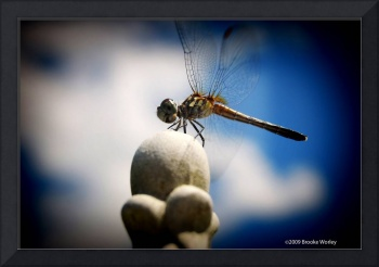 Dragonfly Journey