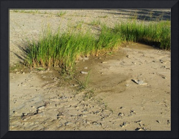 Grass on the Sand