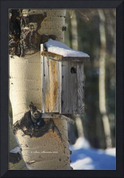 Birdhouse in Aspens Verticle