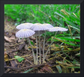 Small Mushrooms Against Mulch and Grass