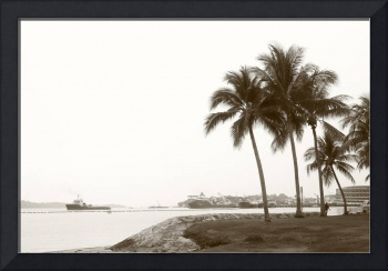 Tropic Coconut Tree, Original monochrome
