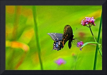 Butterfly`Black Swallowtail Fantasy