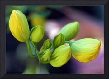 Yellow Flower Buds