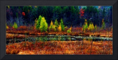 New Hampshire Marsh Edge