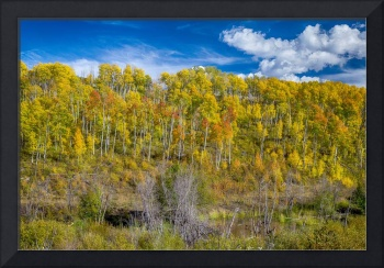 Layers of Colors of an Aspen Tree Forest